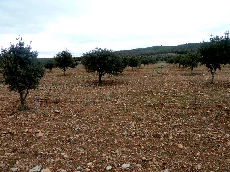 Plantaciones Tuber 2013