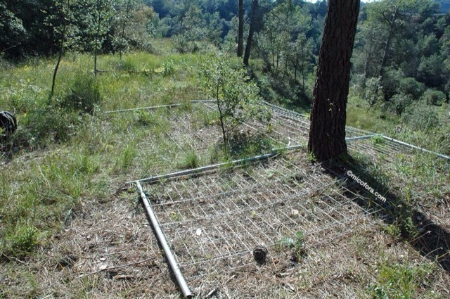 como proteger la trufa silvestre