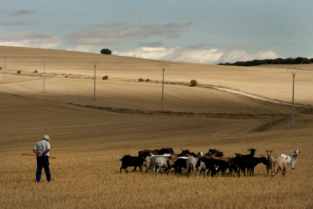 Cillas Rebaño Cabras. Señorio Molina de Aragón. Trufa Negra fresca