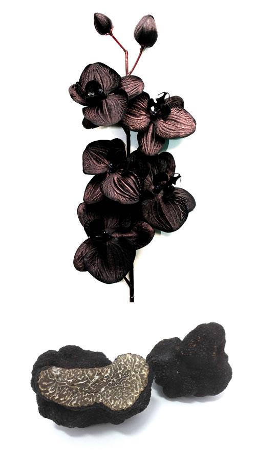 orquidea negra y trufa negra. perfume black orchid